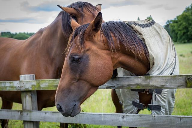 Horse, Horse Portrait, Equine, Equestrian, Rural, Field