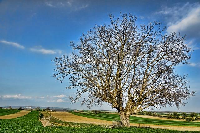 Tree, Walnut, Nature, Landscape, Panorama, Grass, Rural