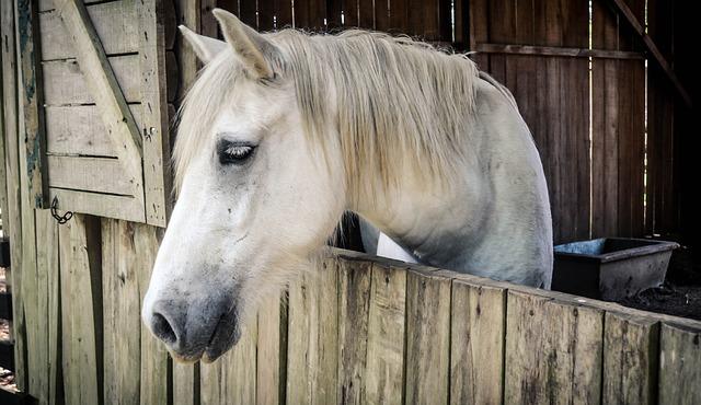 Horse, Barn, Animal, Farm, White, Redneck, Place, Rural