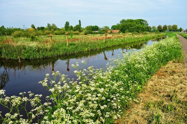 Waterway, Banks, Field, Pollard, Farm, Rural
