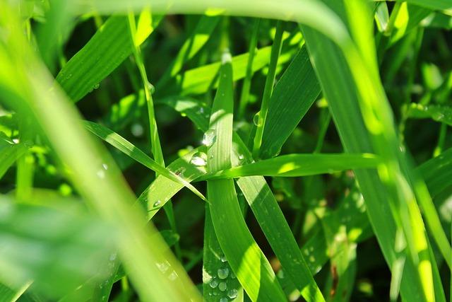 Grass, Meadow, Rush, Blades Of Grass, Nature, Green