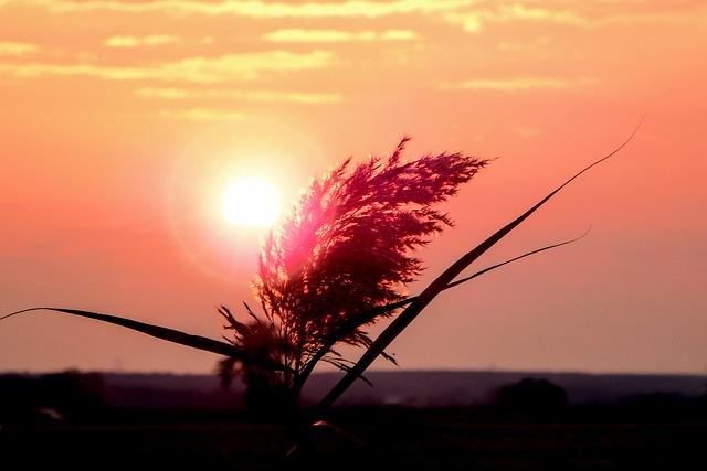 Sunrise, Rush, Reed, Reeds, Nature, Landscape