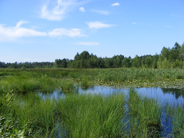 Lakes, Mite, Mud, Water, Forest, Rushes, Lake, Green