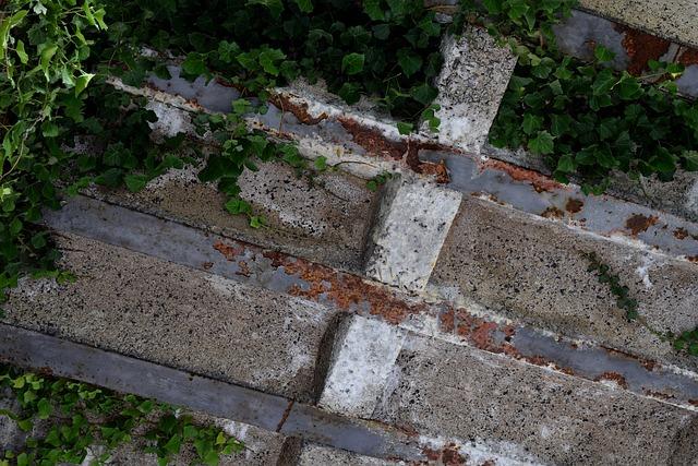 Climbing Ivy, Rust, Rusted, Iron, Steel, Rusty Red