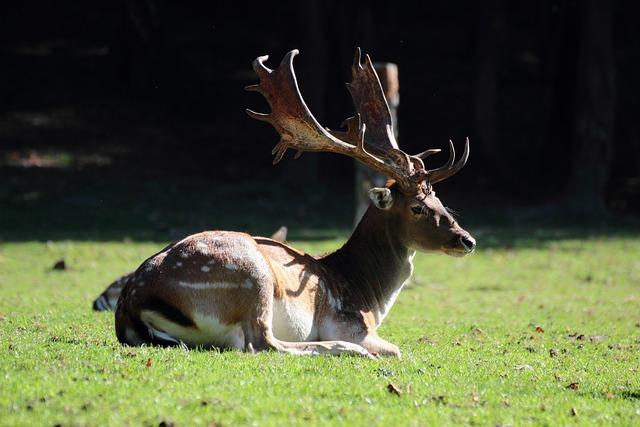 Daniel, Nature, Hart, Rut, Antlers, Tree, Animal