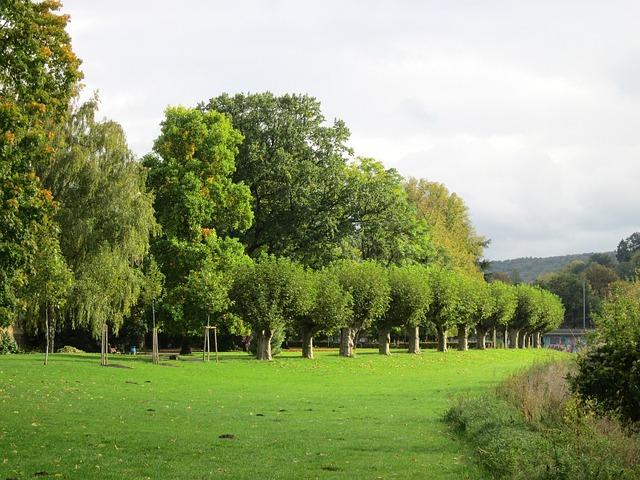 Saarbrucken, Germany, Landscape, Summer, Trees, Grass