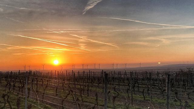 Sunrise, Rheinhessen, Vineyards, Sky, Sun, Sachsen