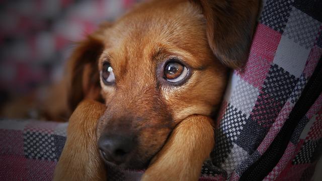 Dog, Cute, Animal, Pet, Puppy, Looking, Doggy, Sad