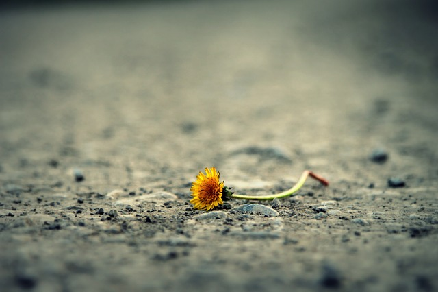 Flower, Road, Dandelion, Alone, Path, Life, Sadness