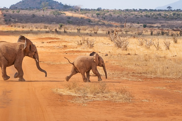 Safari, Elephant, Landscape, Nature, Africa, Savannah