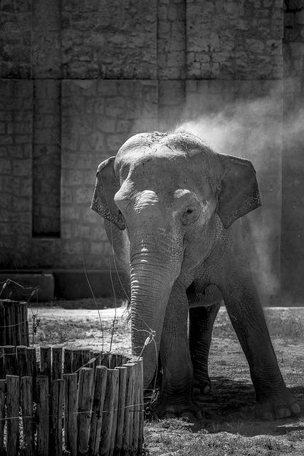 Elephant, Elefante, Africa, Safari, Nature, Elephants