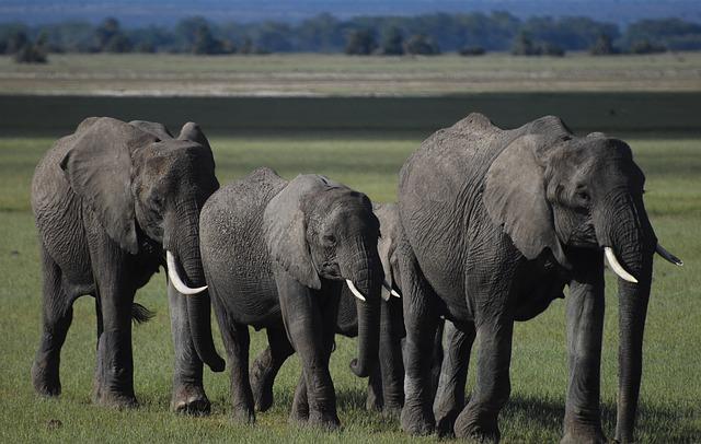 Elephants, Amboseli, Elephant, Kenya, Africa, Safari