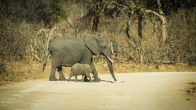 Namibia, Wildlife, Africa, Etosha, Landscape, Safari