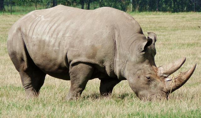 Rhino, Safari Park, Denmark, Animal, Knuth Borg, Africa