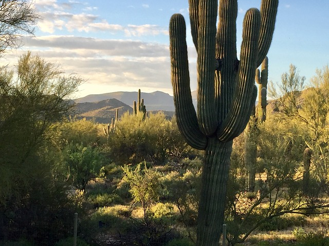 Earth Day, Desert, Saguaro