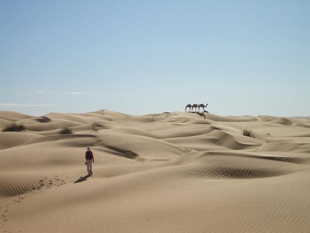Sahara, Desert, Sand, Dunes, Caravan, Dromedary, Wide