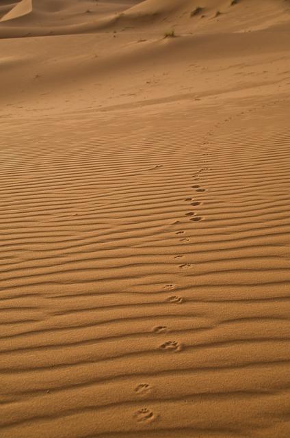 Sand, Sahara, Traces, Desert Fox, Morocco