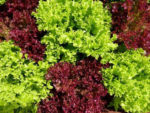 Eat, Food, Salad, Vitamins, Lettuce, Green, Red