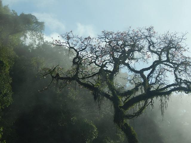 Tree, Mountain, San Javier, Tucumán, Argentina, Fog