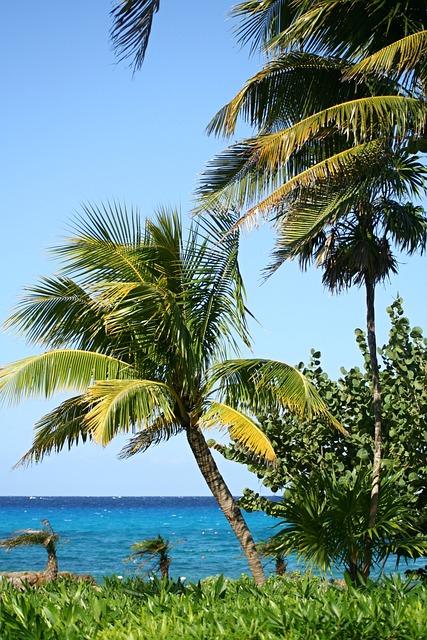 Palm Trees, Beach, Beautiful Beach, Sand Beach, Exotic