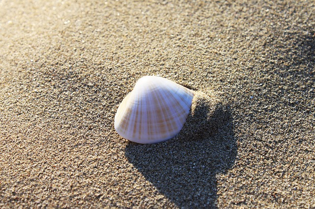 Sand, Beach, Seashore, Shell, Seashell
