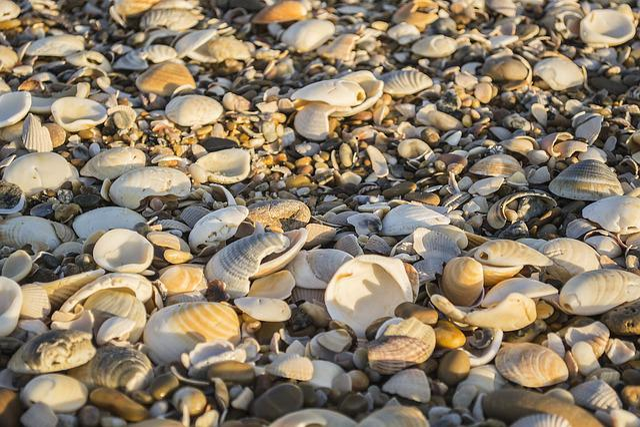 Shells, Beach, Mar, Sand, Beira Mar, Stone, Blue Sea