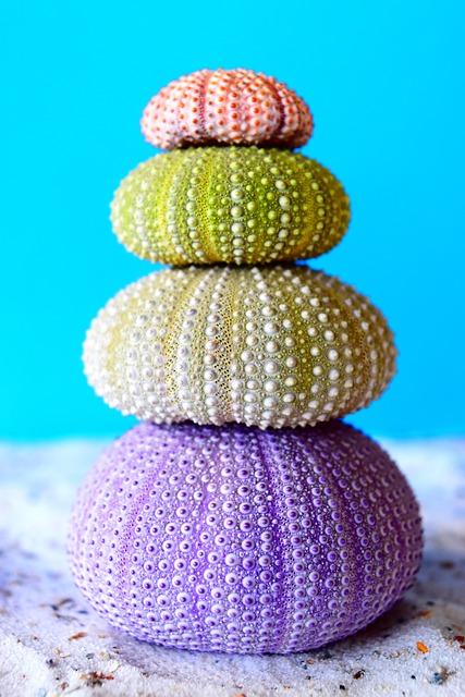 Sea Urchins, Sea, Sand, Color