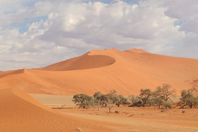 Sossusvlei, Namib, Namibia, Sand Dune, Vegetation