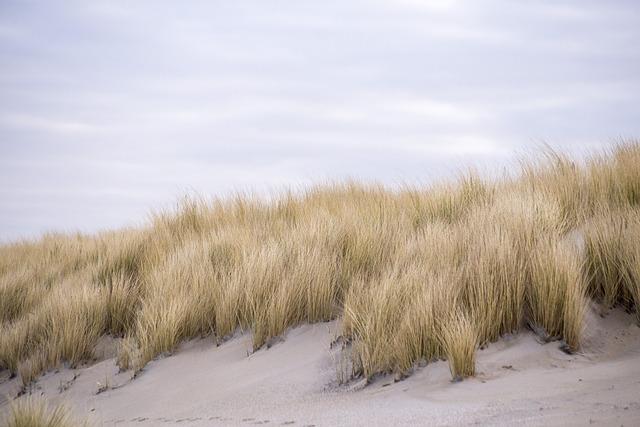 Dunes, Kijkduin, Netherlands, Marram Grass, Sand