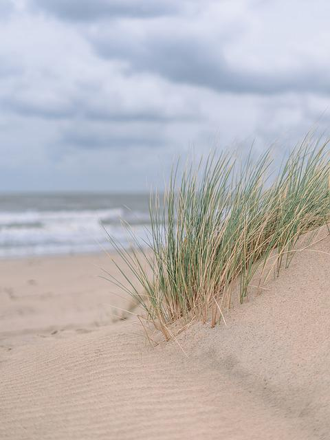 Sand, Sand Dunes, Grass