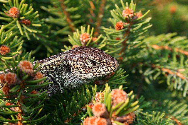 The Lizard, Gad, Spring, Animal, Zoo, Sand Lizard