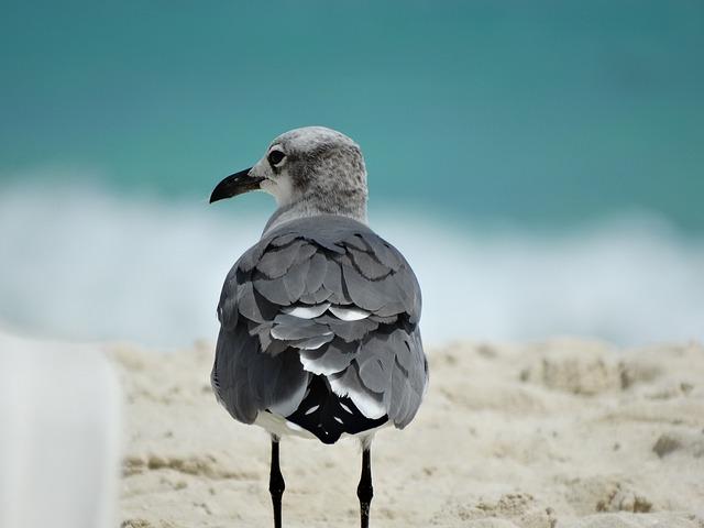 Ave, Beach, Bird, Nature, Animal, Sand, Animals
