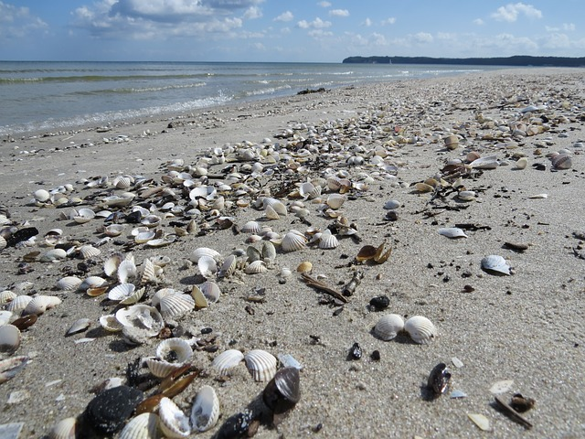 Beach, Mussels, Sand, Sea, Rügen, Prora, Baltic Sea
