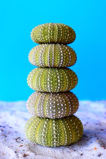 Sea Urchins, Sand, Sea, Green