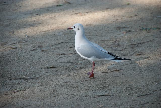 Seagull, Sand, Beach, Sea, Summer