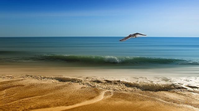 Sea, Vacancy, Sand, Seagull, Side, Spring, Summer