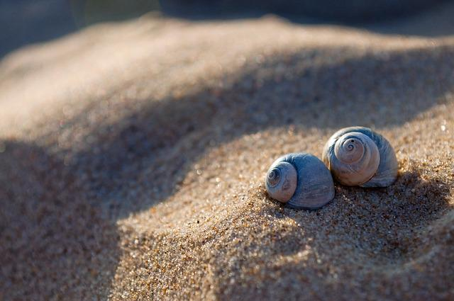 Sand, Beach, The Coast, Seashell
