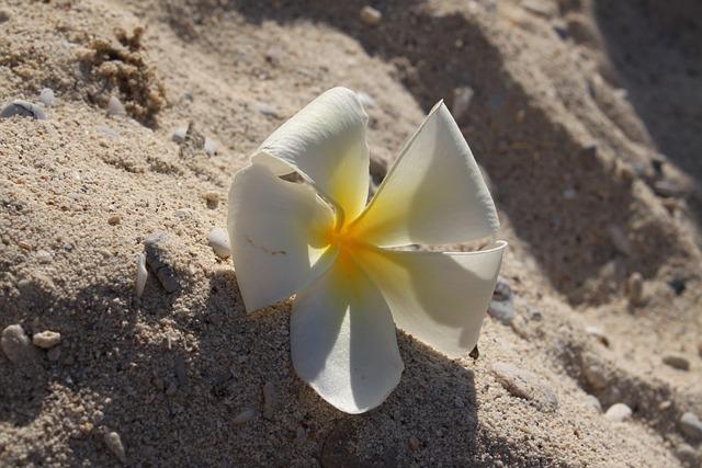 Sand, Thailand, Plumeria, Vacation