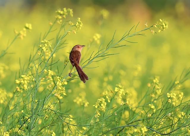 Flower Reform, Yellow, Sank, Feather