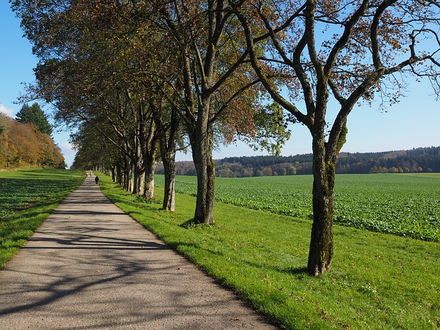 Avenue, Trees, Away, Road, Promenade, Sankt Johann