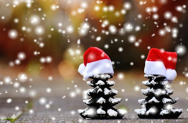 Christmas, Firs, Snow, Trees, Funny, Santa Hat