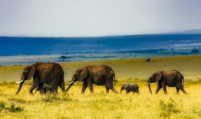 Africa, Safari, Elephants, Wildlife, Savannah, Grass
