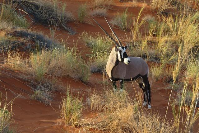 Oryx, Animal, Africa, Namibia, Dune, Sand, Savannah
