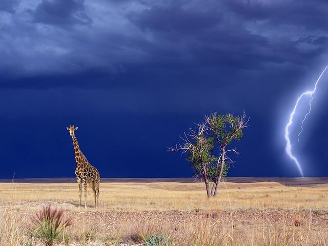 Giraffe, Savannah, Thunderstorm, Wind, Forward, Black