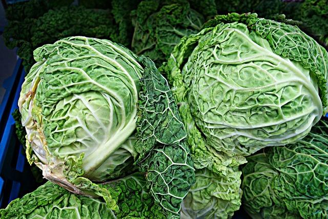 Savoy Cabbage, Cabbage, Brassica Oleracea