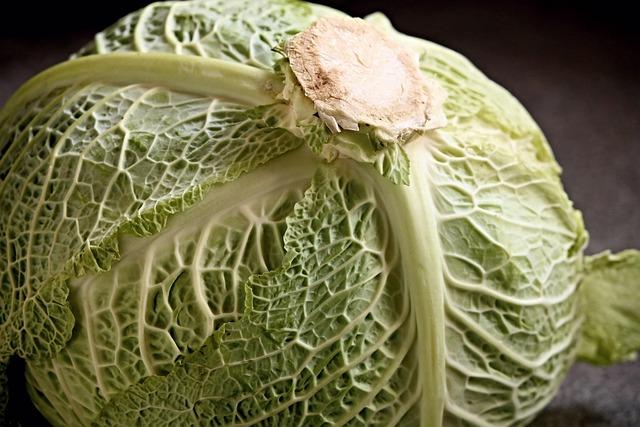 Savoy, Savoy Cabbage Head, Kohl, Vegetables