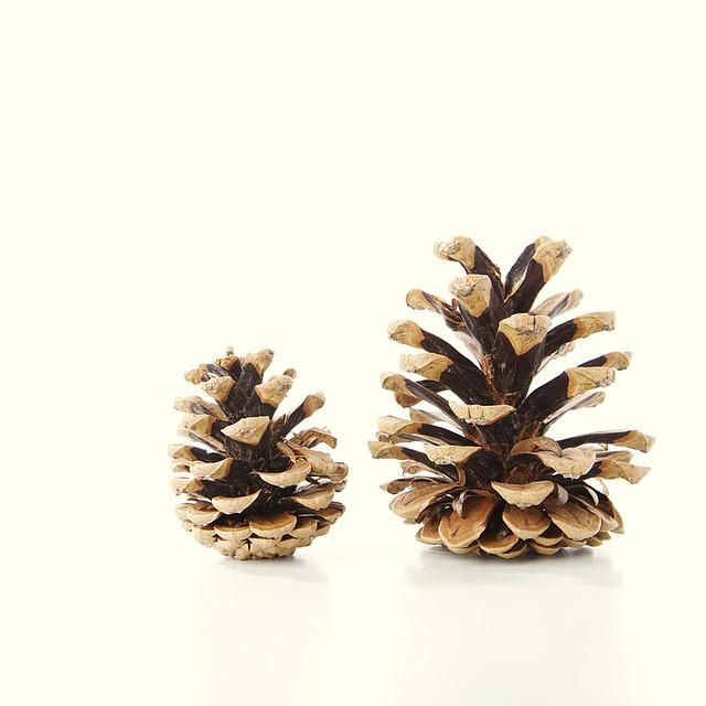 Tap, Fir, Decoration, Pine Cones, Christmas, Scale