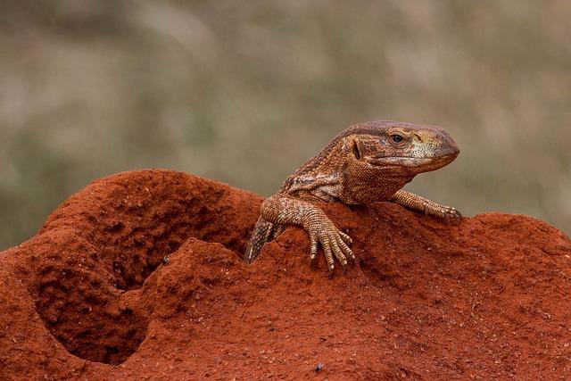 Monitor, Reptile, Lizard, Scaly, Africa, Kenya