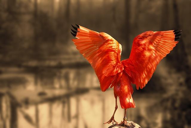 Nature, Red Ibis, Ibis, Scarlet Ibis, Long Beak, Bill