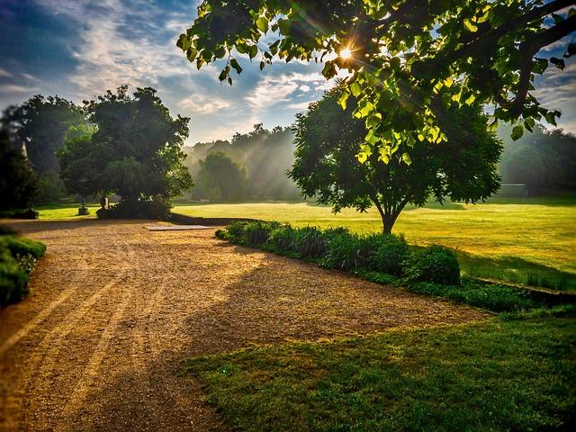 Sunrise, Tree, Scene, Sun, Nature, Sky, Landscape